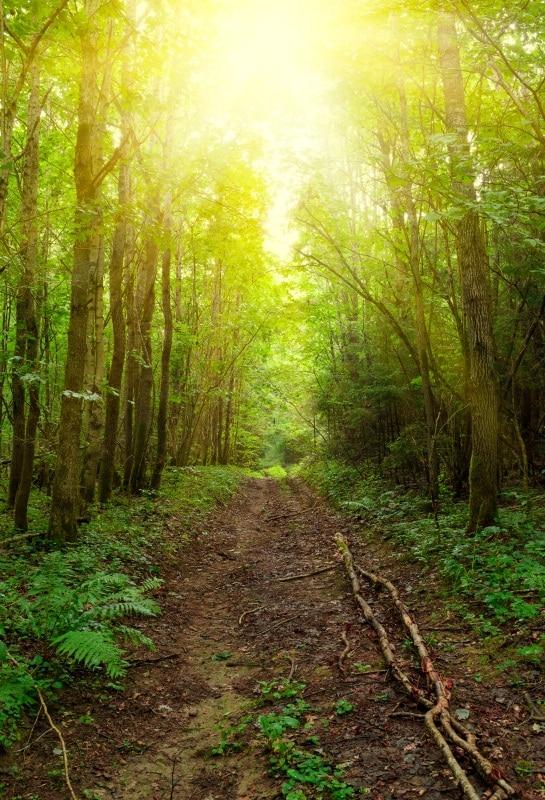 [해외]Laeacco 정글의 숲 나무 봄 햇빛 아름다운 사진 배경 사진 스튜디오에 대한 사용자 지정 사진 배경/Laeacco Jungle Forest Trees Spring Sunlight Scenic Photography Backgrounds Customized Ph